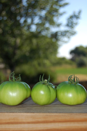 3 Green Tomatoes